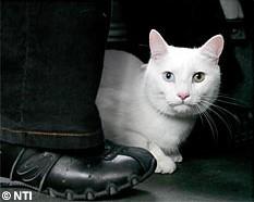 cat in a bus