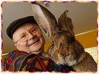 huge rabbit