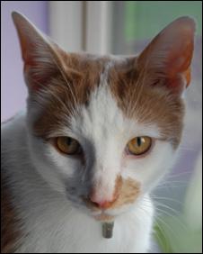 george_the_cat