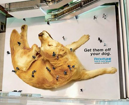 Got Fleas? Cutest Guerrilla Marketing Campaign