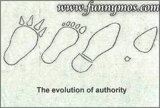 The evolution of authority funny picture