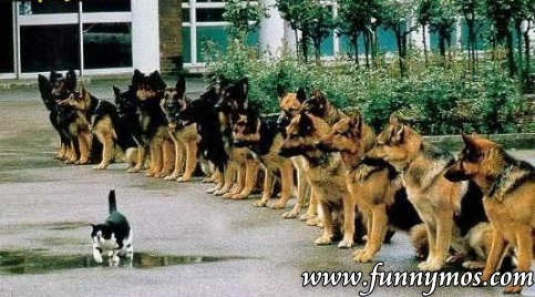 Funny Cat and Dogs