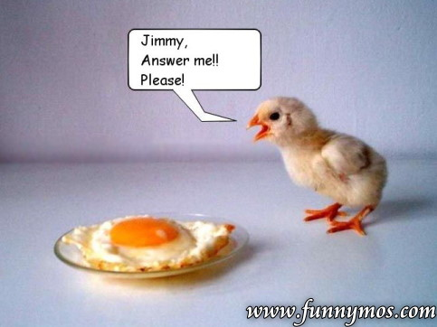 Funny chicken - jimmy