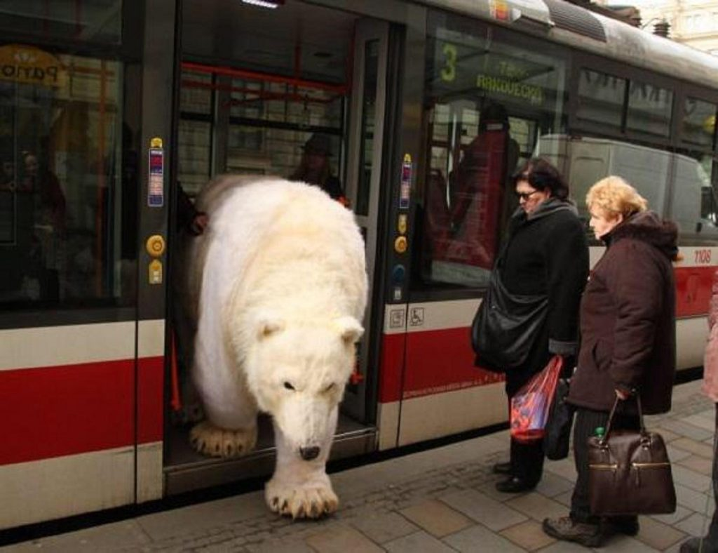 funny bear in russian bus